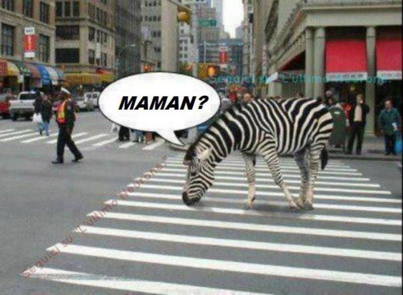 histoire drole zebre